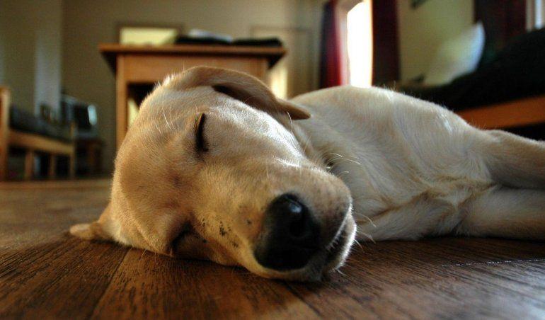 La forma de dormir de tu perro dice cómo se siente