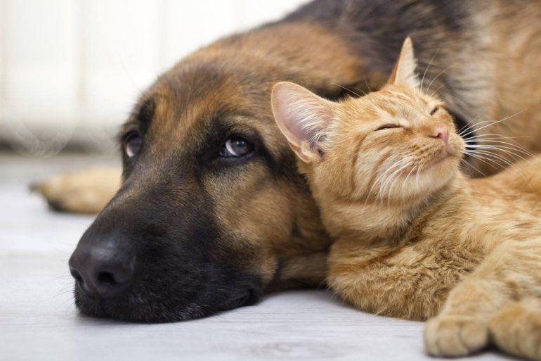 Control de mascotas