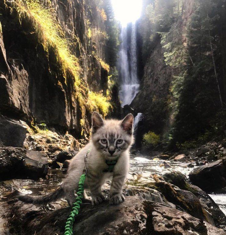 Ocho patas y épicas aventuras alrededor del mundo