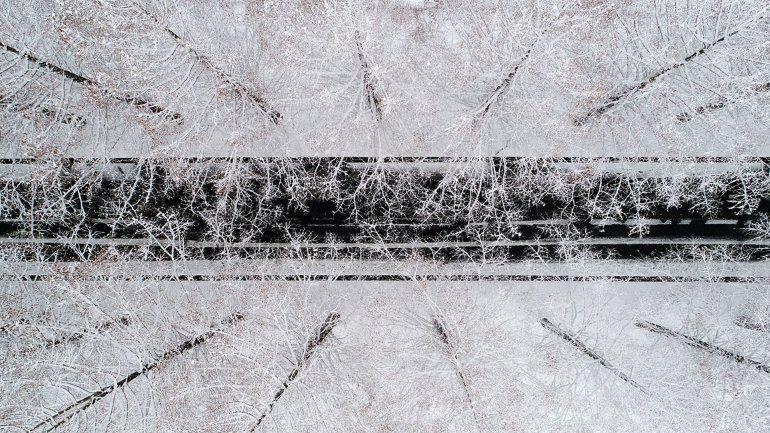 Árboles de metasequoia cubiertos de nieve