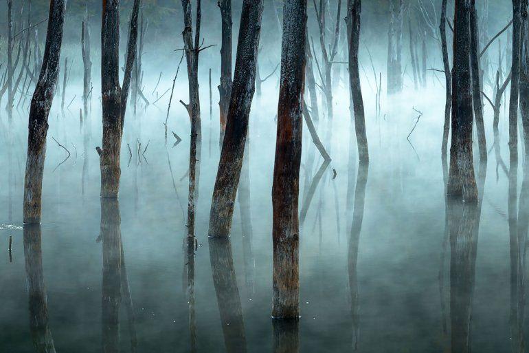 La niebla de la mañana empaña los árboles muertos del lago Cuejdel de Rumania