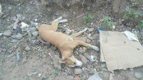 Crueldad y dolor en Perico: más de una decena de perros muertos por envenenamiento