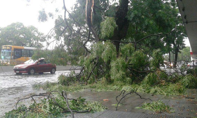 La lluvia y el viento llegaron con todo a la ciudad: cayeron ramas, no hay heridos ni daños graves