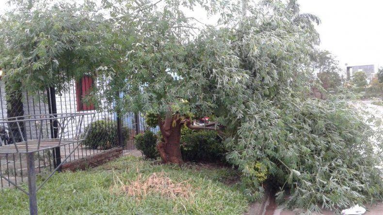 El temporal azotó Libertador y hubo daños e inundaciones en muchos barrios de la ciudad