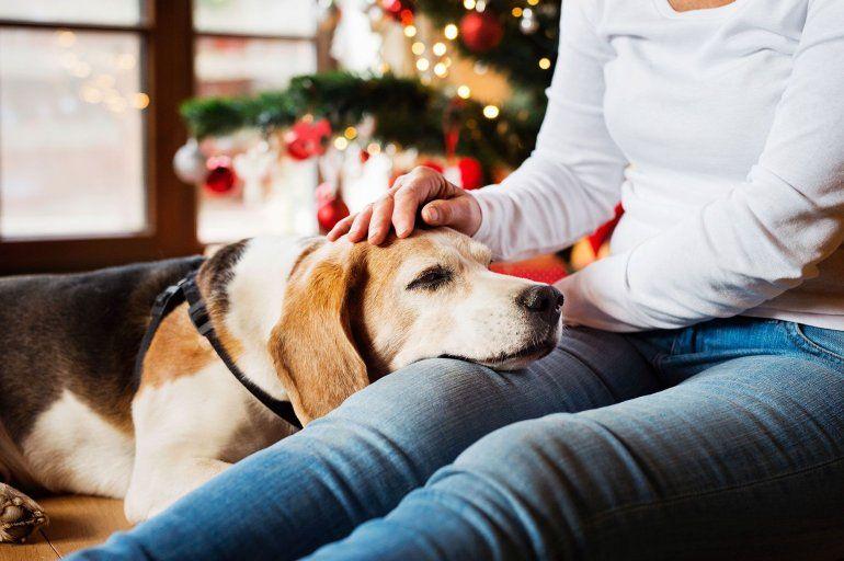 8 consejos para cuidar a los animalitos de la casa durante las fiestas de fin de año