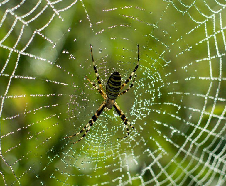 Lanzan una aplicación para identificar arañas y escorpiones venenosos