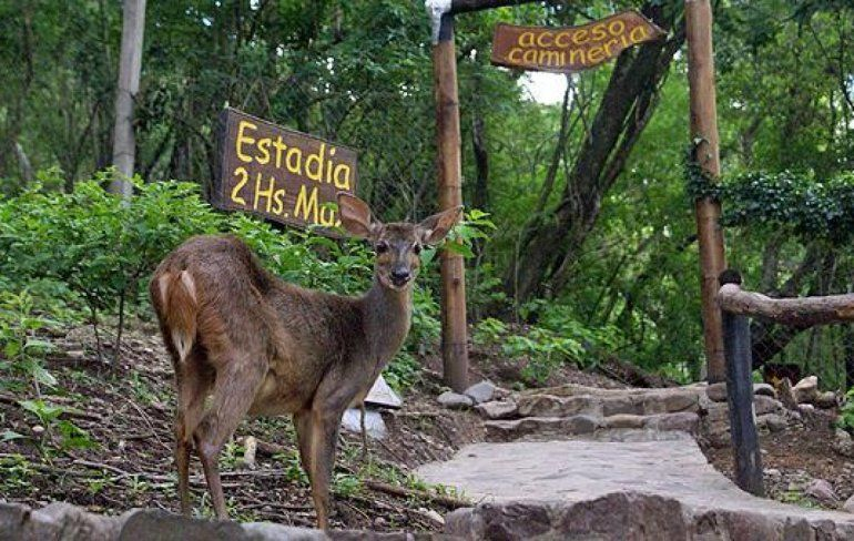 Hoy arrancan las caminatas nocturnas en el parque botánico a partir de las 19:30 hs.