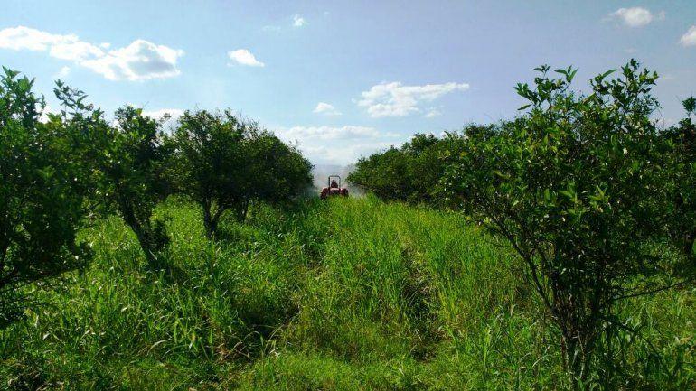 Fumigaron más de 150 hectáreas contra la leprosis en Yuto