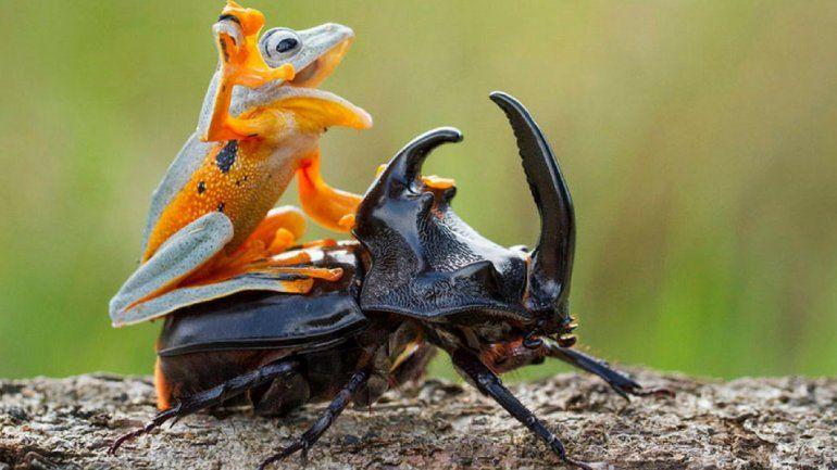 ¡Arriba las manos! Sin pistolas y cuchillos, amenazaron con una rana y un escarabajo para robar un bar en Jujuy