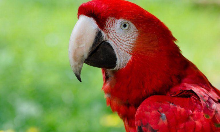 Balcedo tenía un zoo con animales exóticos en su chacra de Uruguay