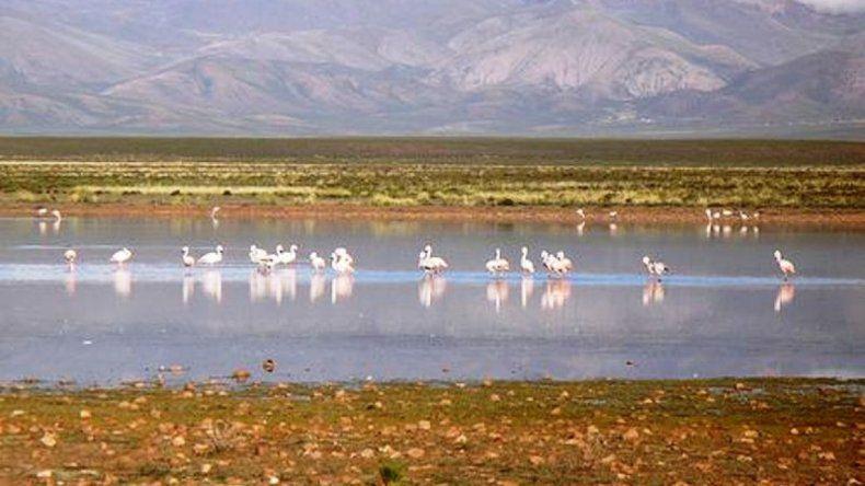 Se viene una nueva edición del Festival Homenaje a la Laguna de Pozuelos