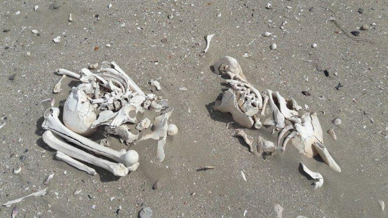 Chubut: una pareja de turistas encontró veinte esqueletos humanos en la playa
