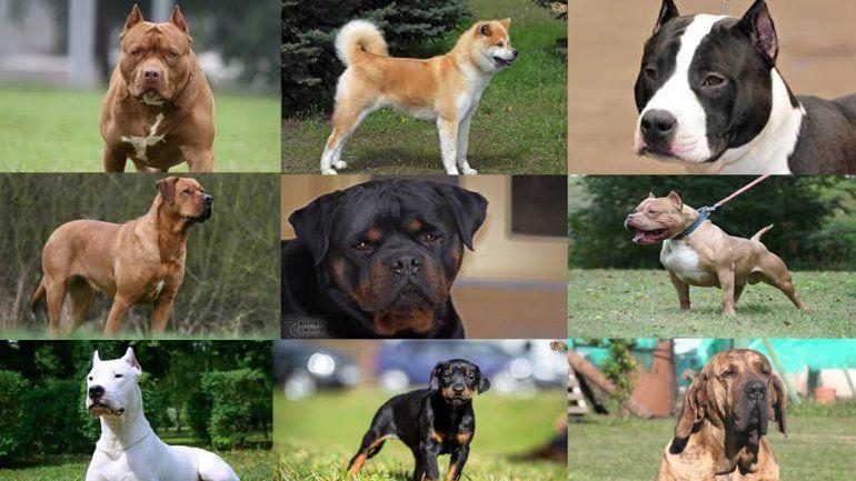 Estas son las razas de perros más peligrosas del mundo
