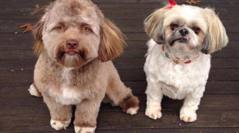 Bob, el perro con cara de humano que asombra en Internet
