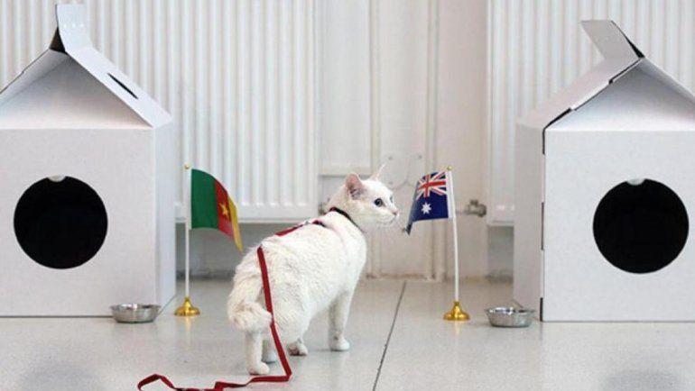 Aquiles: el gato sordo que pronosticará los resultados del Mundial 2018