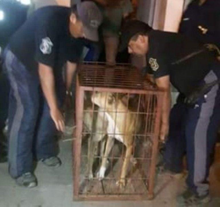 Horror en Salta: capturaba perros callejeros y se los daba a sus pitbull para que los coman