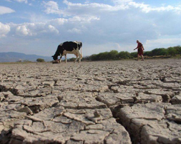 La sequía también golpea a los frigoríficos y obliga a productores a vender más barato