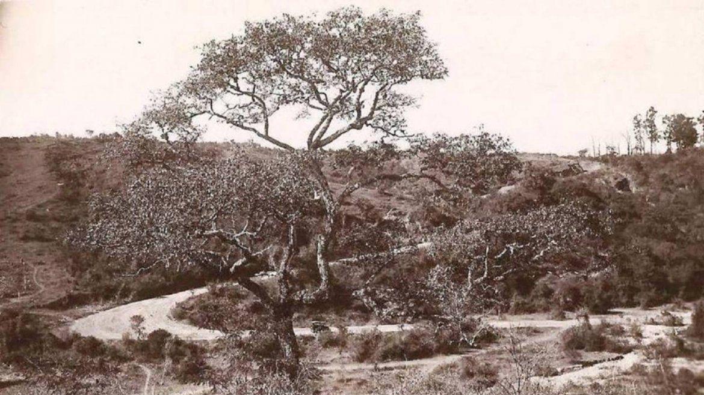 Subida a Alto La Viña en 1924