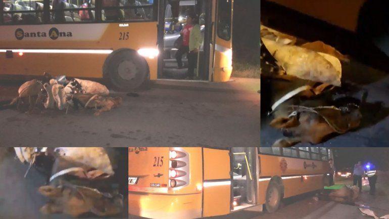 Un colectivo chocó contra un caballo: heridos y un animal muerto