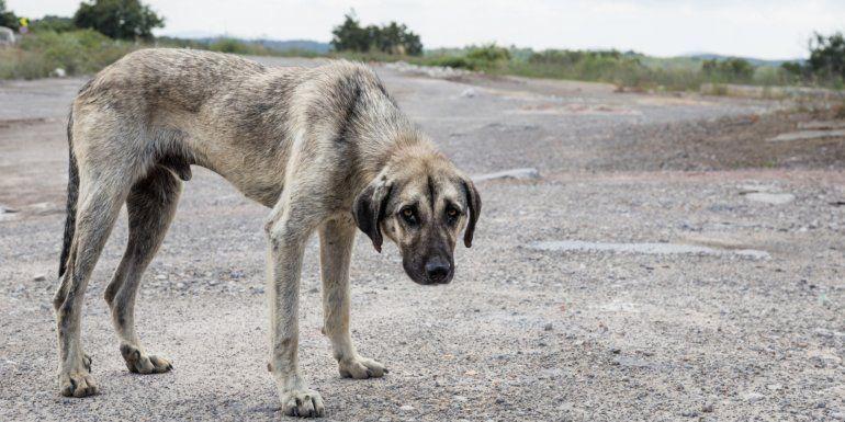 Maltrato animal: las protectoras sostienen que se desconoce la ley y no se toman las denuncias