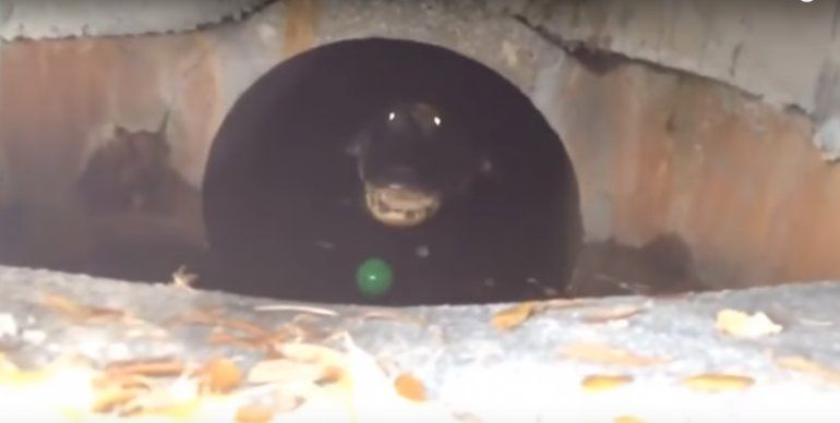 VIDEO: Terrorífica criatura captada en EEUU causa temor a los ciudadanos
