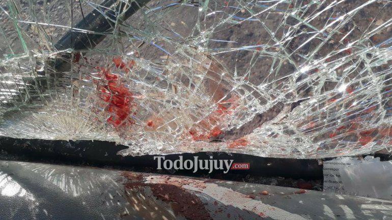 Otra vez los animales sueltos: un colectivo chocó contra un caballo en la Ruta 34