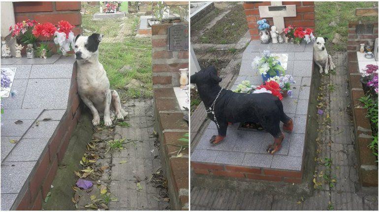 Un ángel: la historia del perro que no se despega de la tumba de su dueño