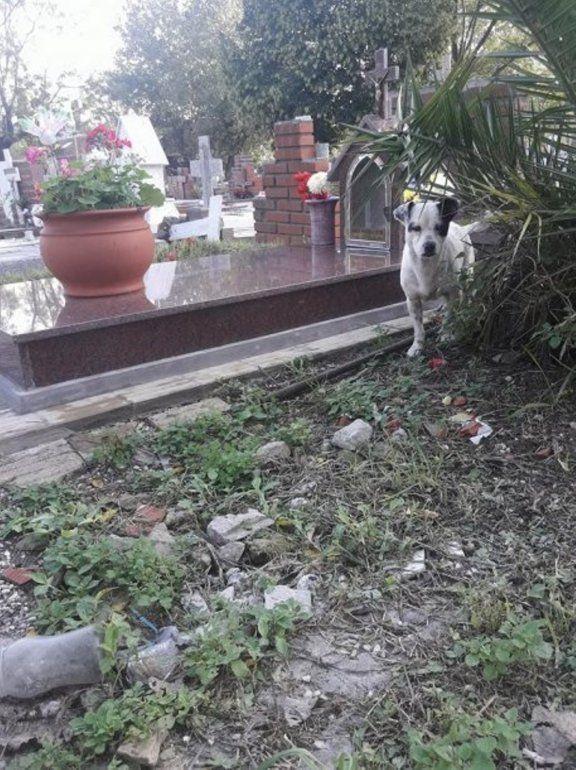 Adoptaron al perrito que no se iba de la tumba de su dueño