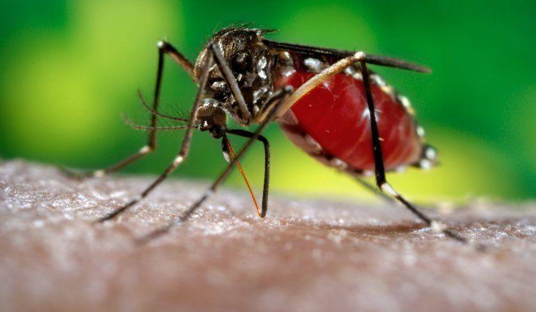 Alerta en el NOA: confirman 17 casos de zika y siete de dengue en Salta