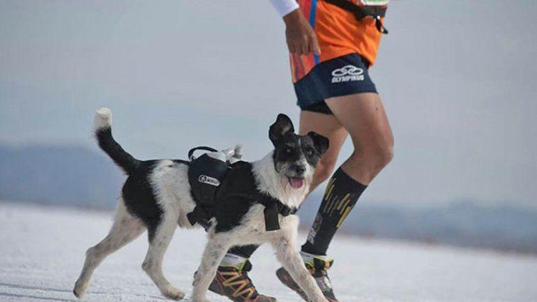 Jujuy: adoptó un perro callejero, lo entrenó y corrió con él en el Raid de Los Andes