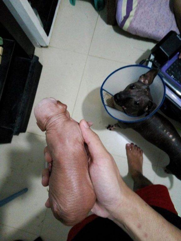Subió una foto de su cachorro y lo denunciaron pensando que era un pene