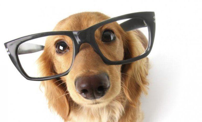 Conocé el ranking de las 79 razas de perros más y menos inteligentes
