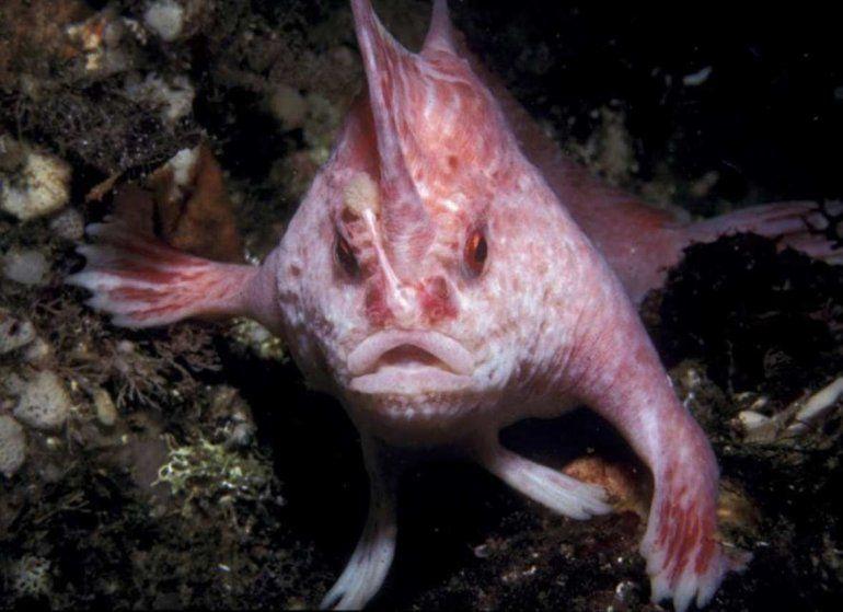 El pez rosado con manos