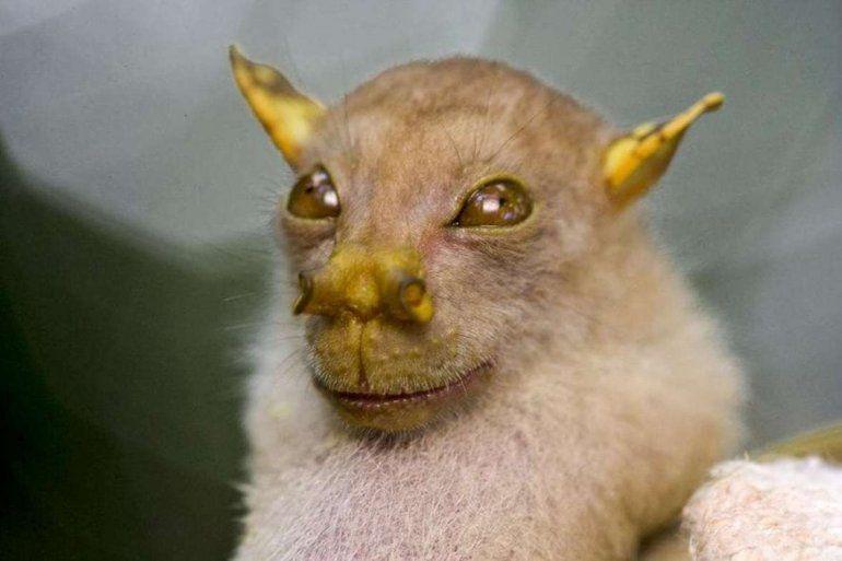 El murciélago de nariz tubular