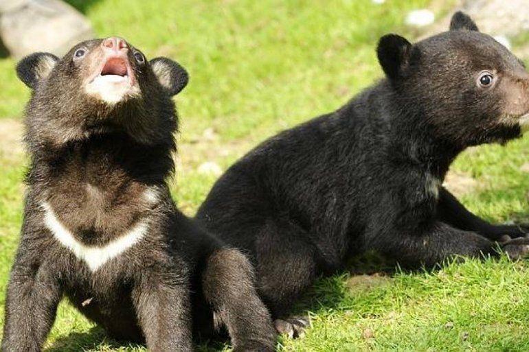 Adoptaron a un perro y años más tarde se dieron cuenta que era un oso