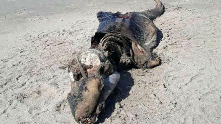 Criatura monstruosa apareció en la costa de Gales y descolocó a los científicos