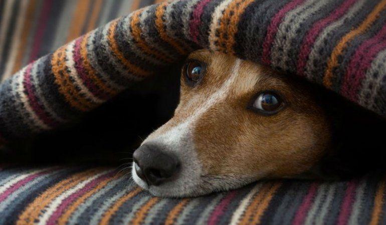 Las mascotas también deben cuidarse de los cambios extremos de temperatura