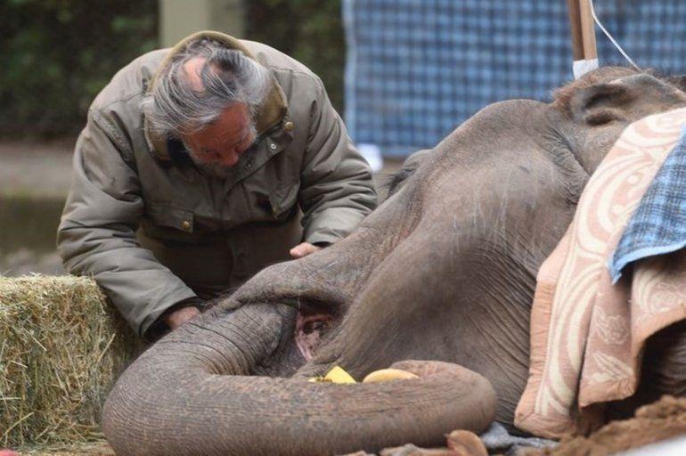 Murió la elefanta Pelusa a los 52 años en el Zoo de La Plata