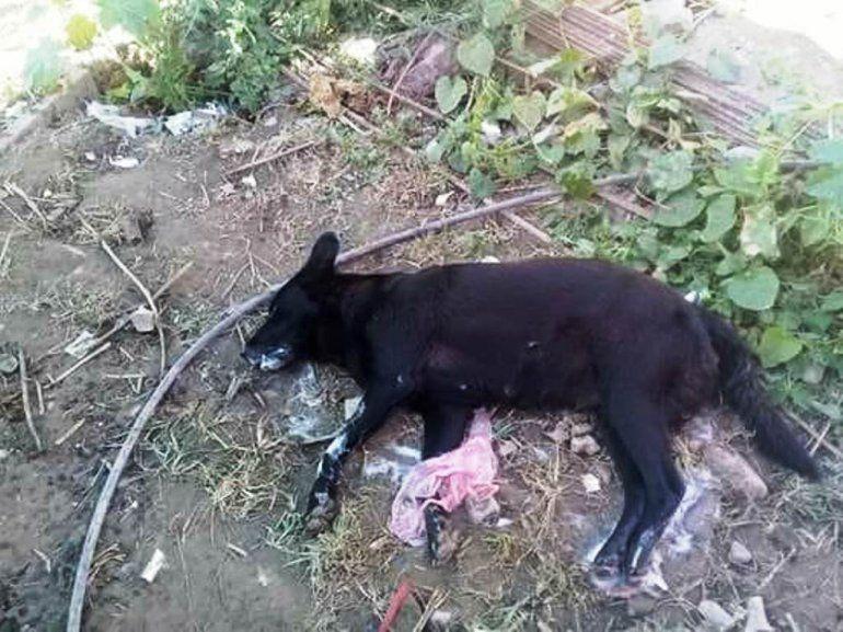 Preocupación por el envenenamiento de perros en Aguas Calientes