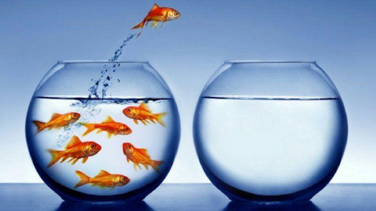 Los cuatro signos invencibles: decididos y firmes ante la vida