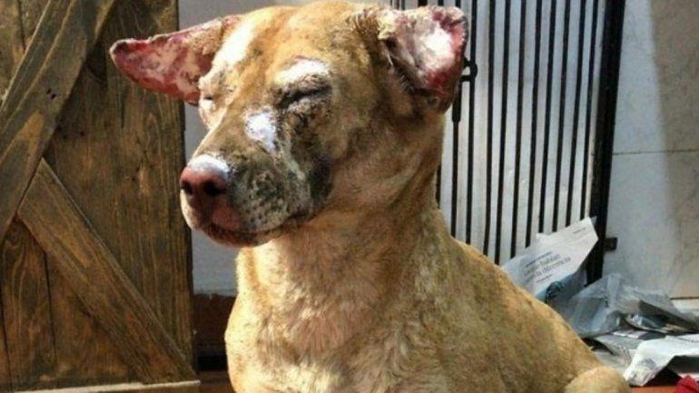 Buenos Aires: más de 50 perros murieron calcinados al incendiarse un refugio
