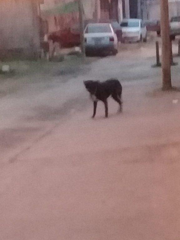Alto Comedero: preocupación por un pitbull que ya mordió a varios chicos