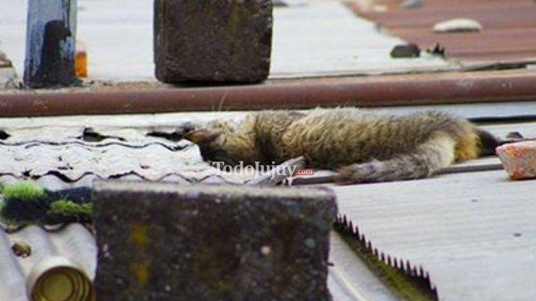 ¡Horror en el barrio San Isidro! Vecinos denuncian matanza de los animales de la zona