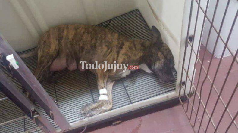 Indignación en Cuyaya por envenenamiento de perros en una casa