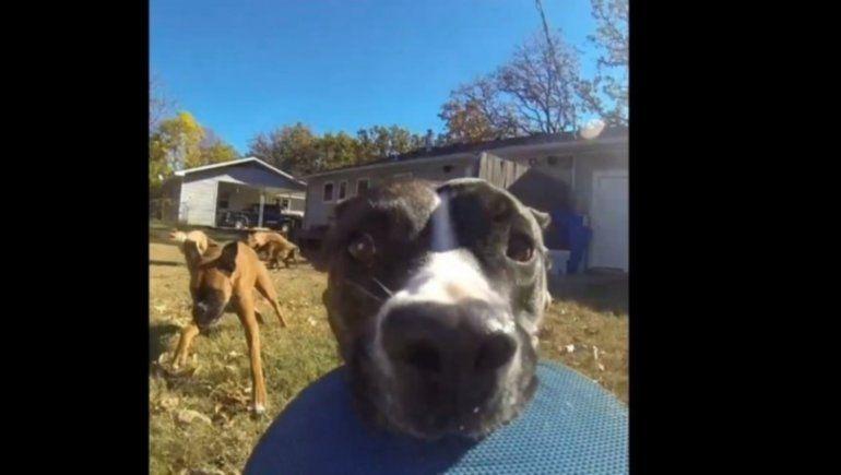 Imperdible: una perrita se robó una GoPro y quedó grabada mientras escapaba