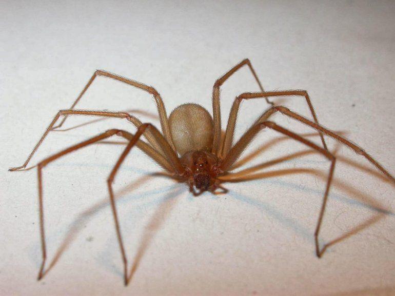 Misiones: le picó una araña, sólo le dieron un calmante y murió al otro día