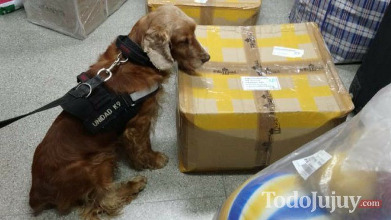 Toby encontró cajas con sustancias sospechosas en la Nueva Terminal
