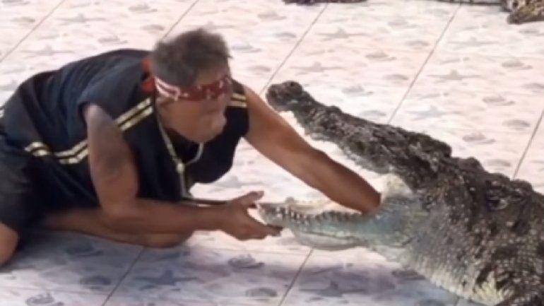 ¡Tremendo! Un cocodrilo atrapó con su mandíbula a un adiestrador