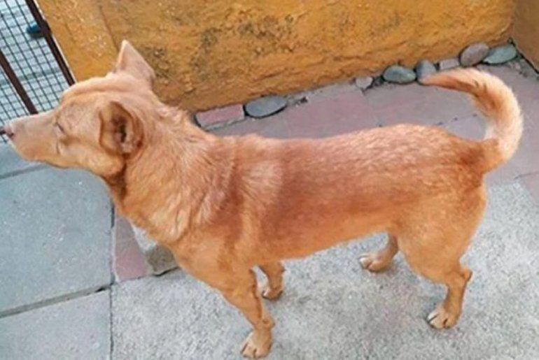 Insólito robo: fue a robar con su perro, se lo olvidó en el lugar y éste lo mandó al frente