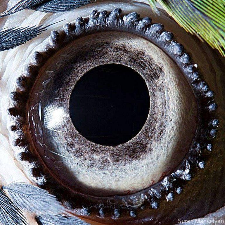 Ojo de guacamayo